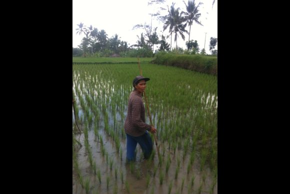 Visit my Hometown and Experience real Bali - 2