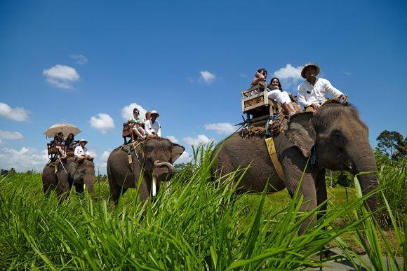 10% OFF  Go Elephant Trekking at Bali Elephant Camp - 0