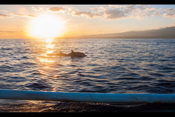 Visit Bali's wild dolphins and key sights in the north - 2