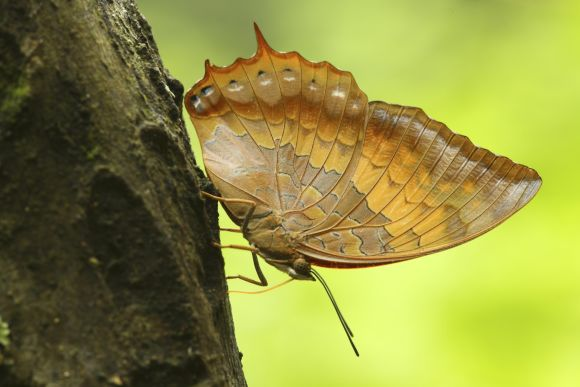 Go on a Photography Tour & Capture Birds, Butterflies & More - 2
