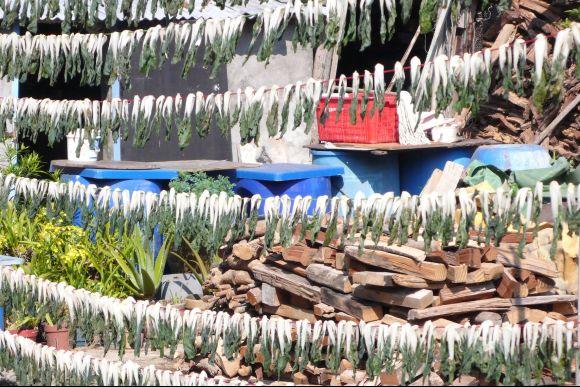Visit Lamma Island: Local Villages, Waterfront, Temples etc. - 0