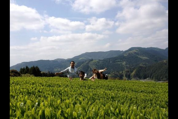 Stay in the Land of Organic Tea and Learn Tea Culture  - 2