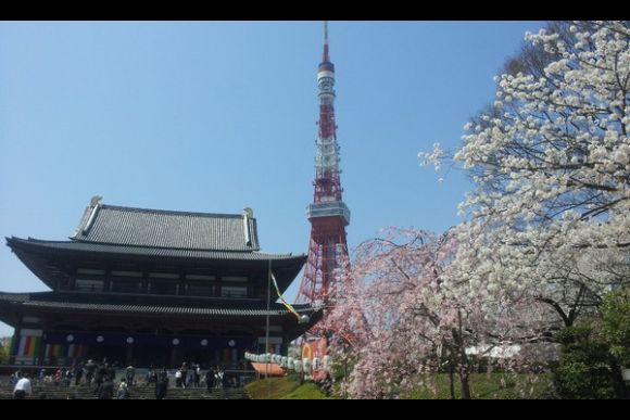 See Sakura Cherry Blossoms & Temples - 0