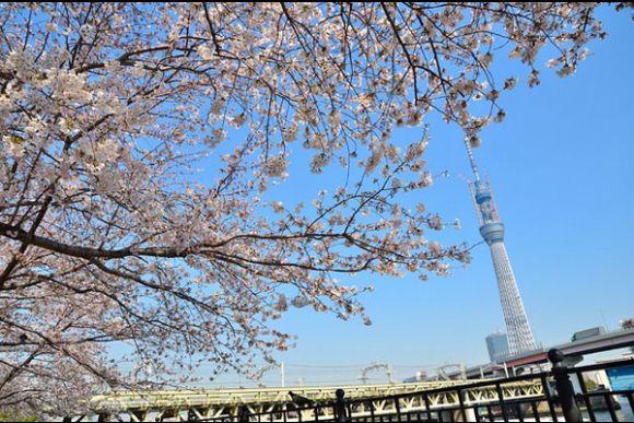 Tour Old Tokyo and Admire Beautiful Sakuras in Asakusa - 0