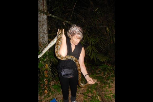 See Wild Snakes in the Jungles at Night - 0