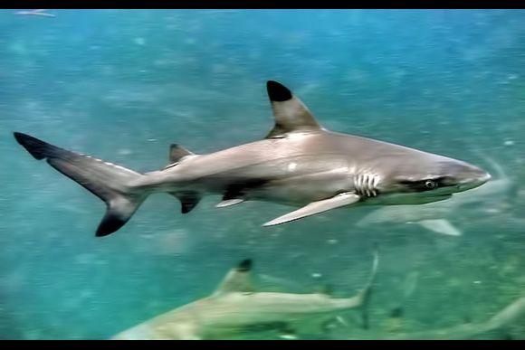 Swim with Sharks! - 0
