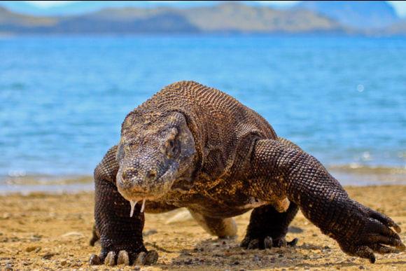 Walk With Komodo Dragons on a Komodo Island Tour (3D2N) - 0