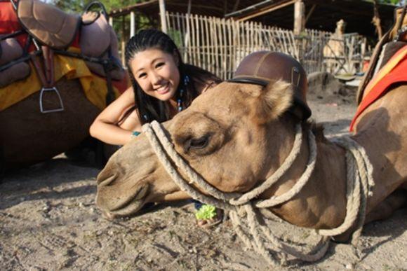 Enjoy a Camel Ride in Bali - 0