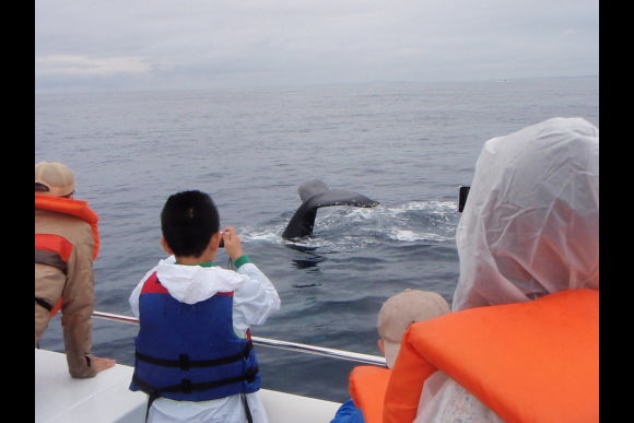 Whale watching tour in Okinawa with a high-speed boat! - 0
