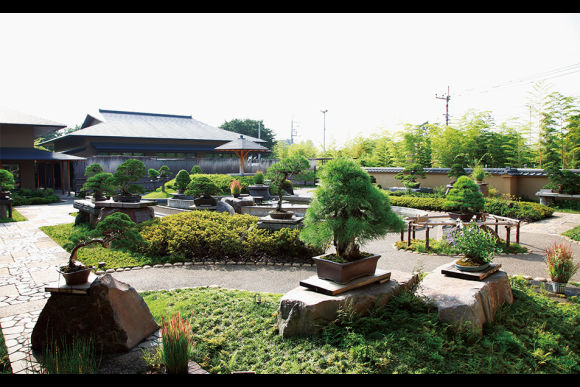 Best Japanese Bonsai Tour in Saitama Omiya Bonsai Village - 0