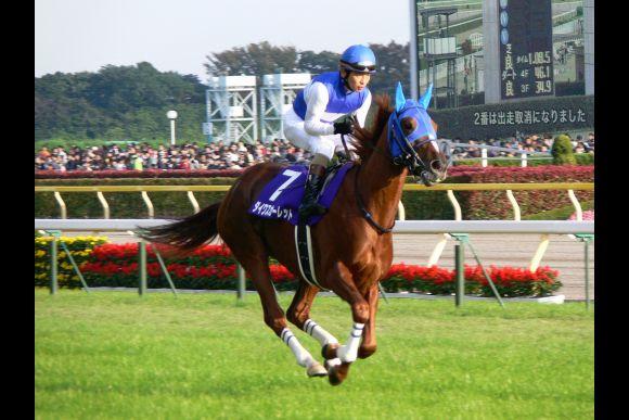 Watch Horse Racing in Kyoto, Japan! - 0