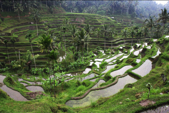 Bali World Heritage Sites Tour - 1