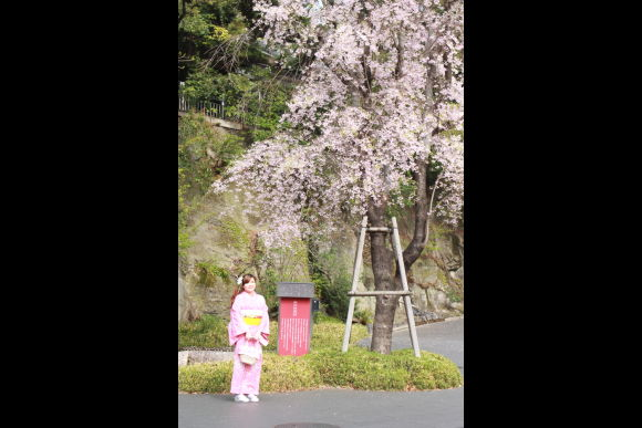 Enjoy Harajuku, Meiji Jingu, or anywhere in Kimono all day! - 1