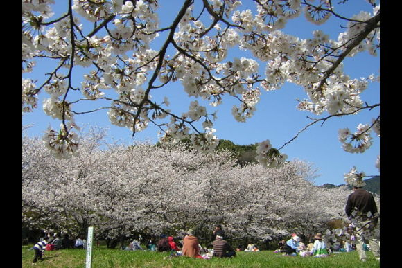 One Week Special Japanese Lesson for Sightseeing in Fukuoka - 0