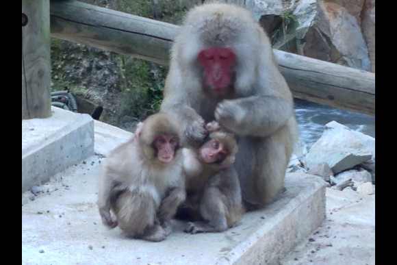 Go to the Snow Monkey Park and Ride the Ryuoo Sky Vessel - 5