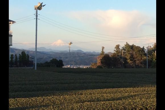 Enjoy tea picking experience in Shizuoka - 2