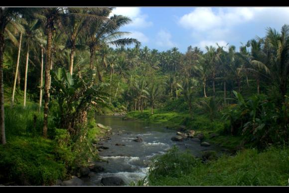 Bali Rice Terrace Trekking Tour - 0