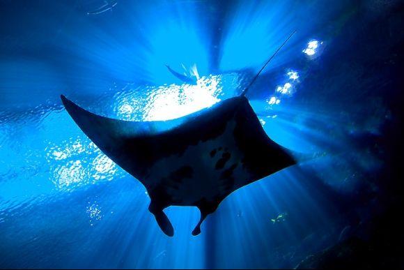 25% OFF Nusa Penida Snorkelling - Swim with The Manta Rays  - 0