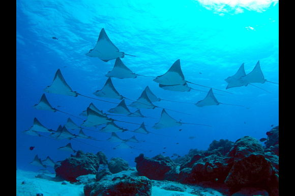 25% OFF Nusa Penida Snorkelling - Swim with The Manta Rays  - 2