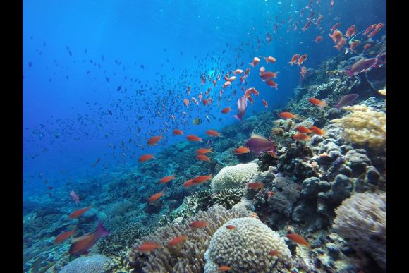 25% OFF Nusa Penida Snorkelling - Swim with The Manta Rays  - 3