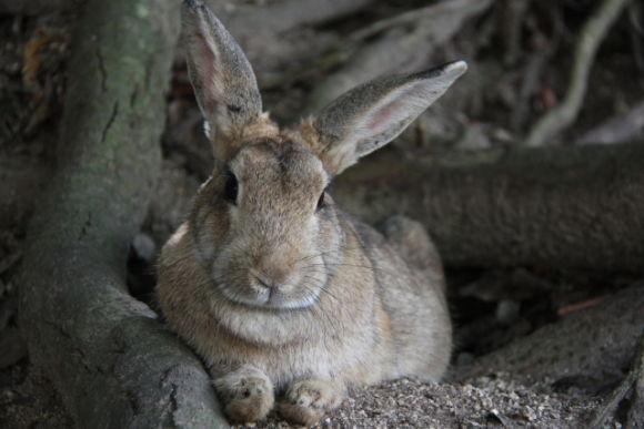 See the Rabbit Island and taste sake near Hiroshima! - 0