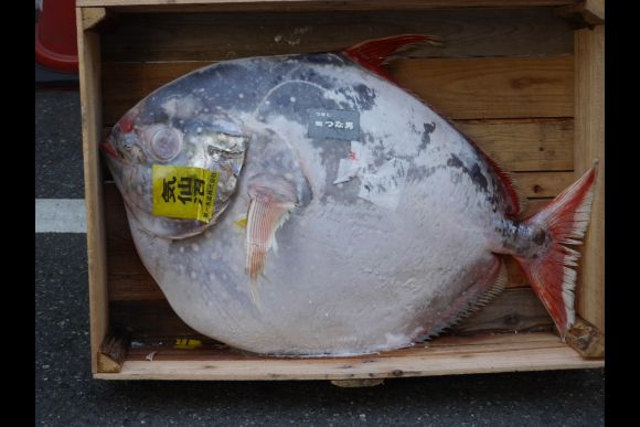 See the world's largest Tsukiji Fish Market in private tour - 0