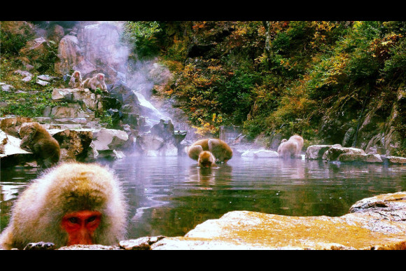 Enjoy a one day Snow Monkey and Cycling Tour in Nagano - 0