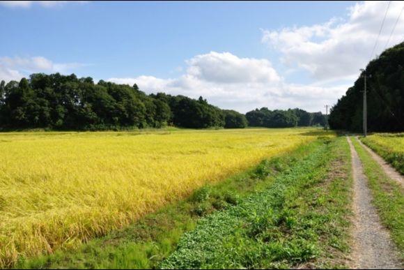 Inzai's Rural Village Vicinity Mountain Running/Walking Tour - 0