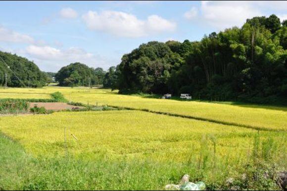 Inzai's Rural Village Vicinity Mountain Running/Walking Tour - 2