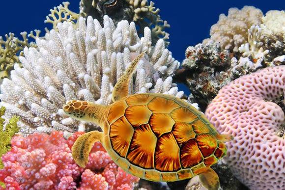 25% OFF Siam Ocean World Ticket: SEA LIFE Bangkok Aquarium - 1
