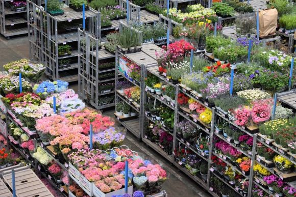 Enjoy a private tour of the large Ota Market in Tokyo - 0
