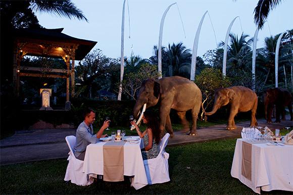 25% OFF Safari Under the Stars with Taro Elephant Park Bali - 0