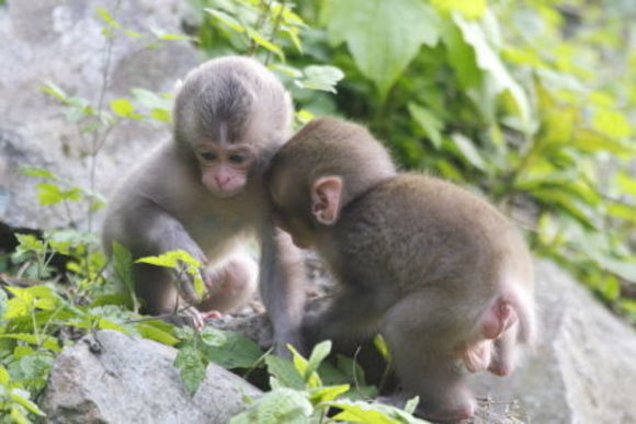Join Snow Monkey Walking & Cycling Day Tour in Nagano - 3