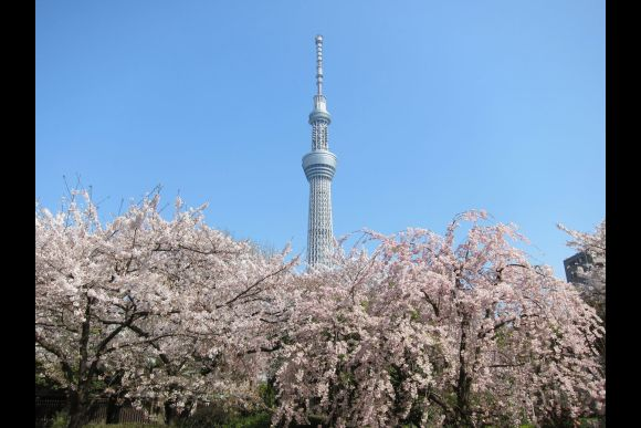 Enjoy 1-Day Bus Tour Around Best Tourist Spots in Tokyo! - 2