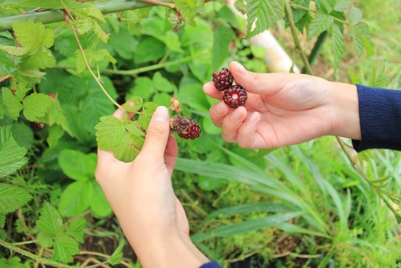 Visit a local farm near Tokyo and have fresh lunch! - 4