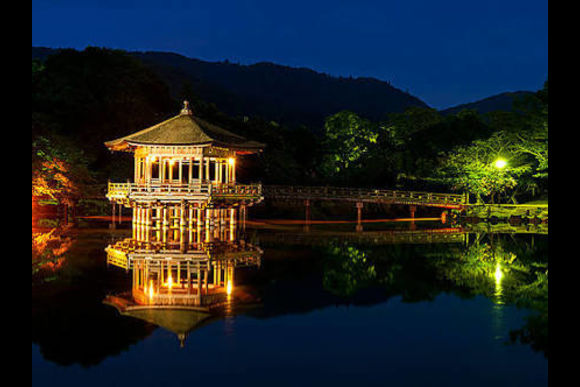 Cycle through Temples, Shrines and Deer in Nara - 0