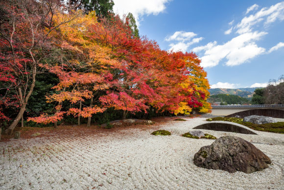 Explore the highlights of southern Kyoto in a half-day tour! - 1