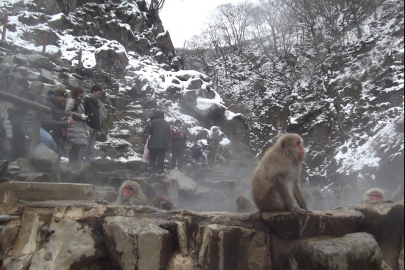 Go on a one day trip to see the Snow Monkeys! - 4
