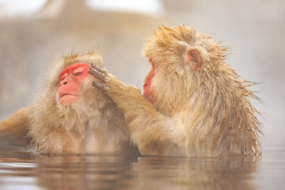 Day Tour to See Japan Snow Monkeys in Nagano's Hot Spring - 0