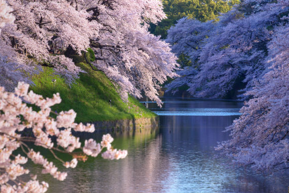 Visit Tokyo's best sakura (cherry blossom) spots! - 2