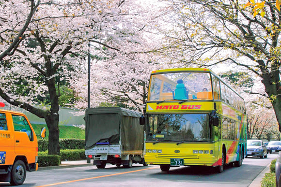 Sakura Cherry Blossom Viewing from an Open Top Bus in Tokyo - 0