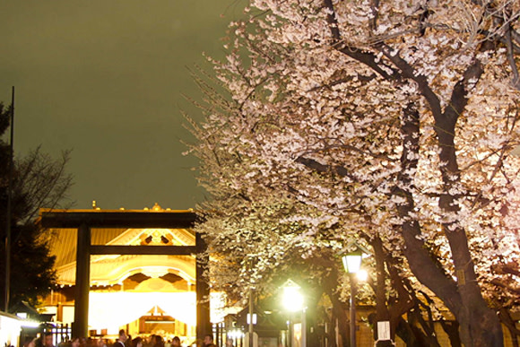 Sakura Cherry Blossom Viewing from an Open Top Bus in Tokyo - 3