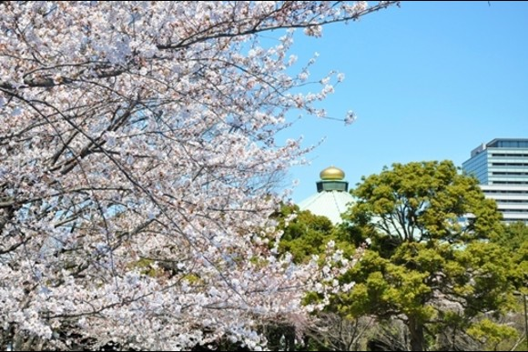 Sakura Cherry Blossom Viewing from an Open Top Bus in Tokyo - 4