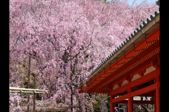 Customise and embark on a Private Half Day Tour in Kansai - 1
