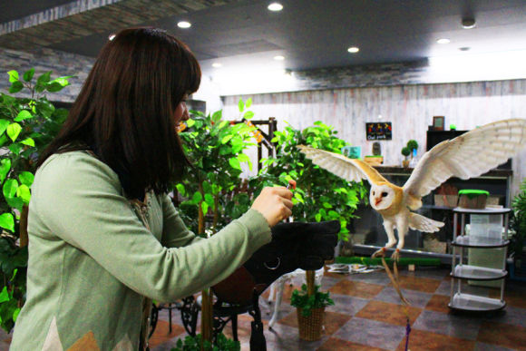 Play with Cute Owls at the Owl Park Cafe in Ikebukuro, Tokyo - 0