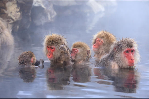 Day Tour to See Japan Snow Monkeys in Nagano's Hot Spring - 2