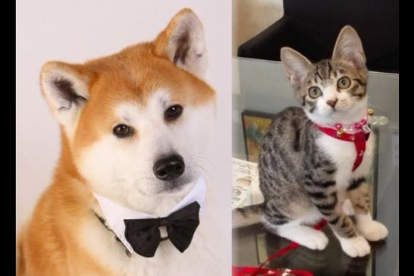 Dine or Drink with the Affectionate Akita Dog in Tokyo - 1