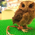 OWL CAFE KYOTO