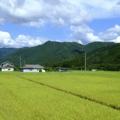 Voyagin Japan Regional Tours