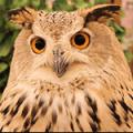 OWL CAFE WEST